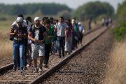 Mültecilere Dair Sağlık Hizmetleri Hakkında Duyuru